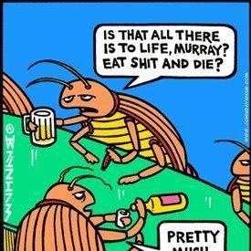 at the dung beetle bar